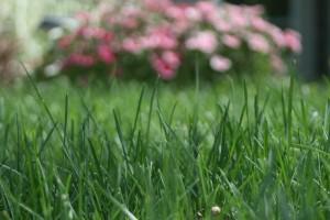 lawn (29)